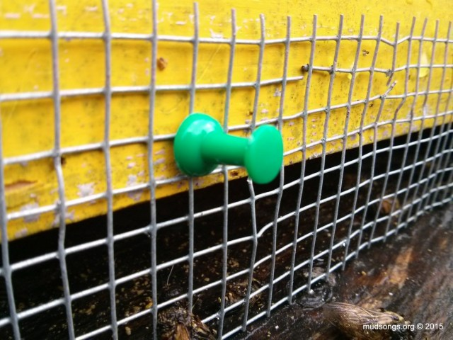 One of three thumb pushpins used to attach shrew-proofing mesh to hive. (Dec. 13, 2015.)