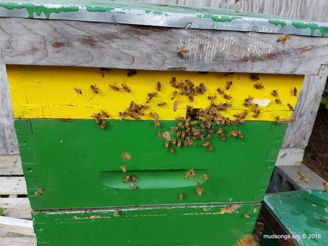 Bees using the top entrance. And...