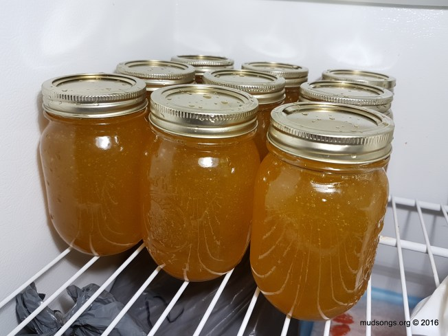 My personal stash of honey in the freezer. (Sept. 28, 2016.)