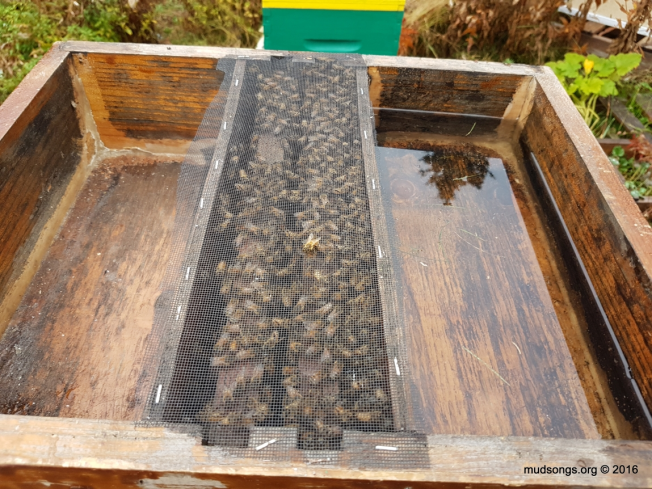Hive top feeder screen in the middle so the bees are contained inside the hive. (Oct. 10, 2016.)