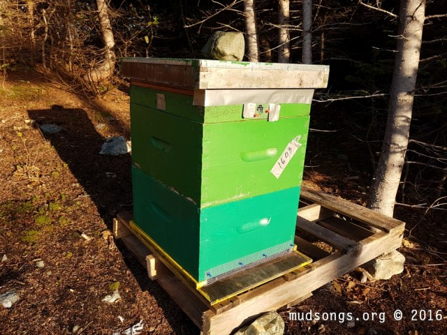 This hive gets blasted by the morning sun every day for about an hour. The dark green paint heats up quickly in the (warm to the touch), and the hive is sheltered from high winds already. So I'm happy. (Nov. 14, 2016.)