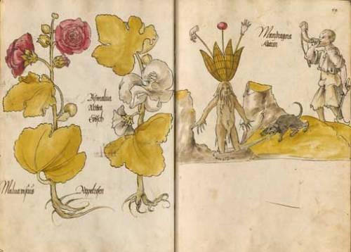 Darstellungen aus einem Arzneipflanzenbuch, wahrscheinlich aus Augsburg | © Bayerische Staatsbibliothek