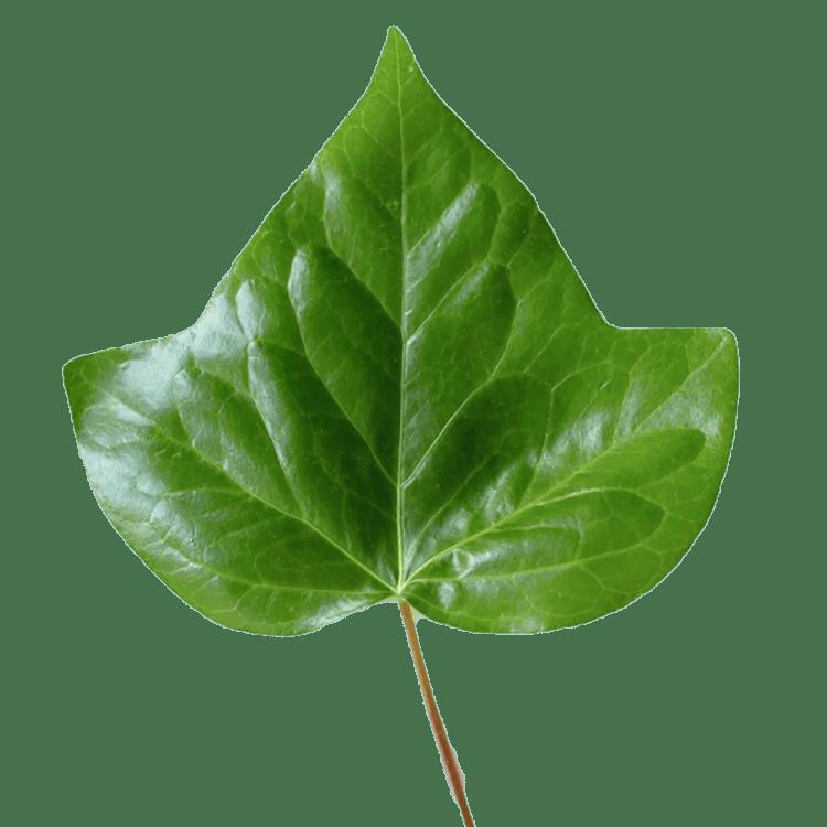 why Muesli? health, sustainability, taste