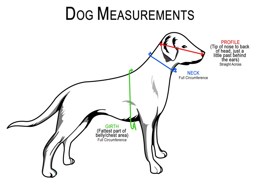 Dog sizing chart for Muffin's Halo