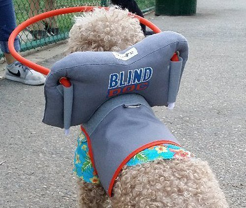 My-Blind-dogs-halo-2