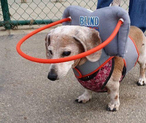 My-Blind-dogs-halo-4