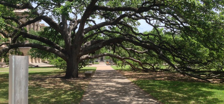 Aggie Conservatives Guard Century Tree from LGBT