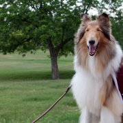 Reveille Fights Societal Pressure to Settle Down