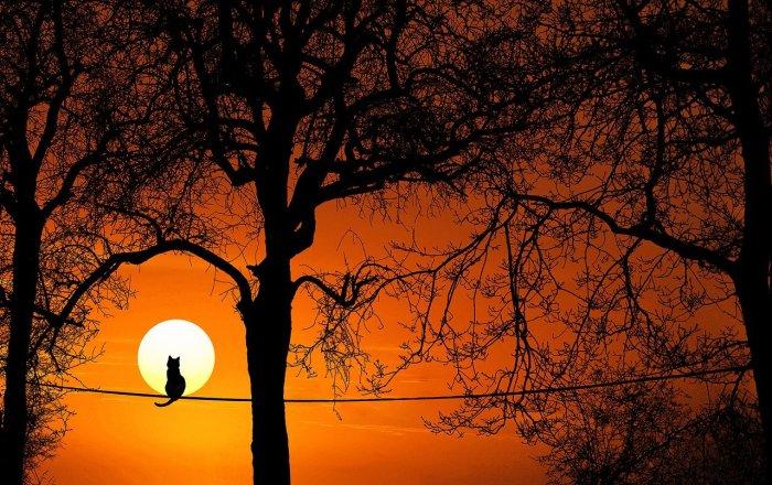 木の上で黄昏る猫のイメージ画像