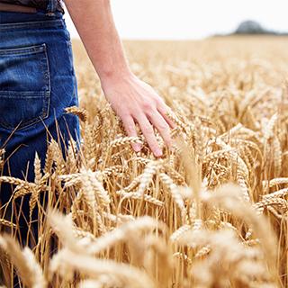 わきたつ 国産 古代小麦 オーガニック 全粒粉 石臼 石窯 天然酵母 国産小麦 生きてく力になる 食事 パン 「わきたつ」
