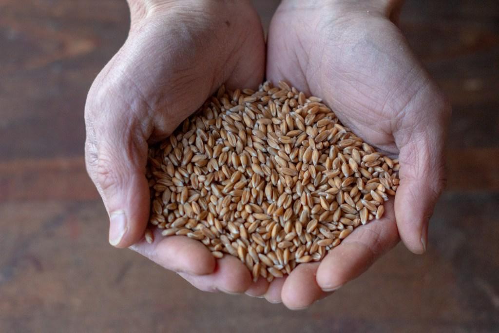 パン もと 国産 スペルト小麦 古代小麦 オーガニック 全粒粉 石臼 石窯 天然酵母 パン 通販