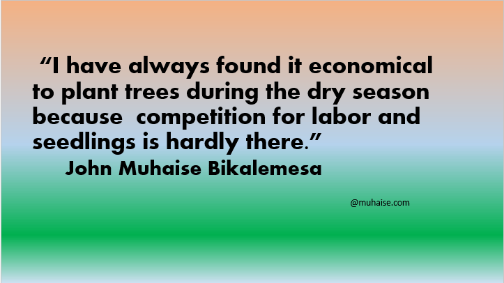 Planting trees is economical during dry season
