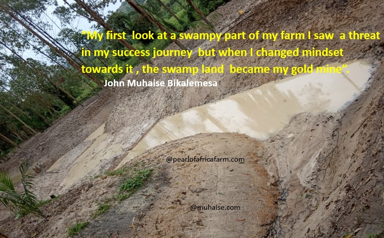 Success Journey with swamp land