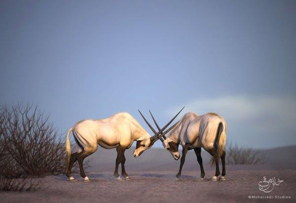 Oryx Collection Two - Muharraqi Studios