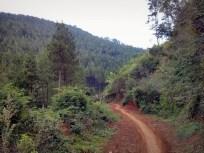 Trek di hutan menuju Moko Daweung