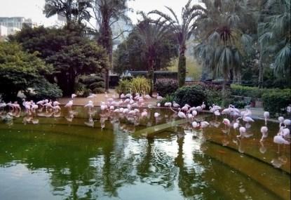 Kolam Flamingo
