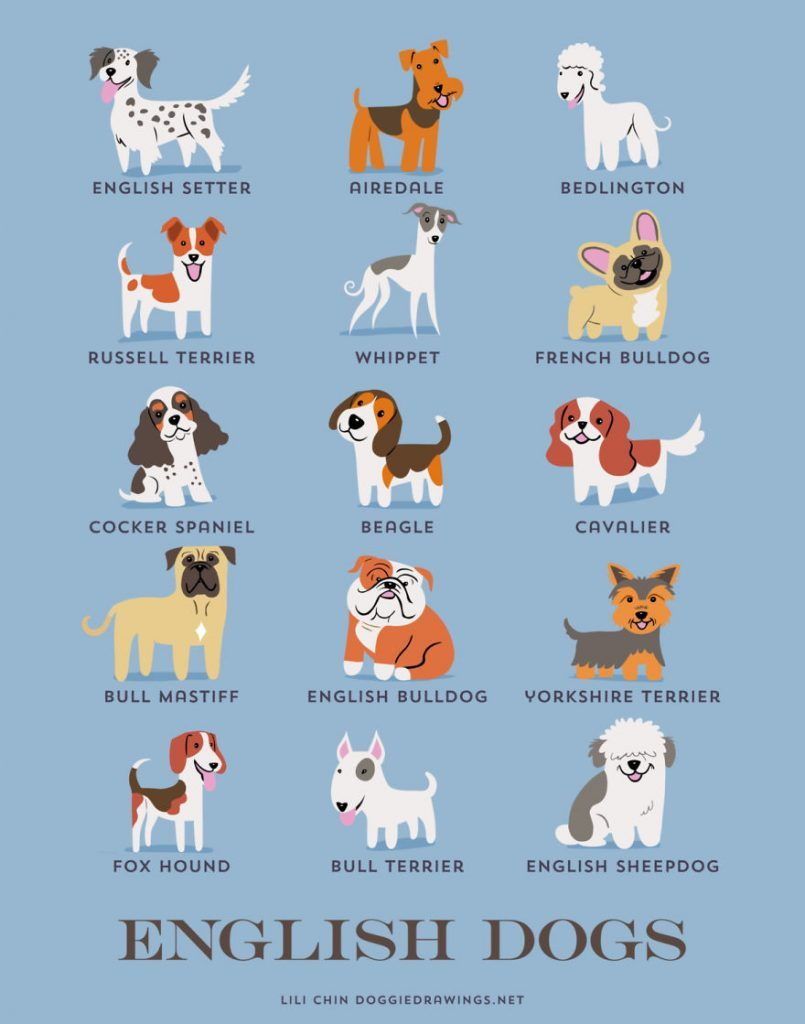 Dogs-Of-The-World-Cute-Poster-Series-Shows-The-Geographic-Origin-Of-Dog-Breeds5__ingles