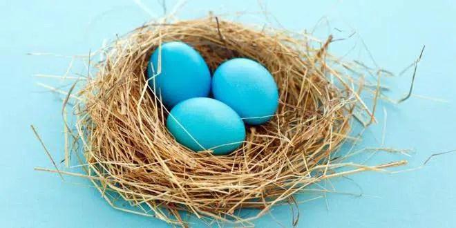 Huevos-azules-gallina-araucana