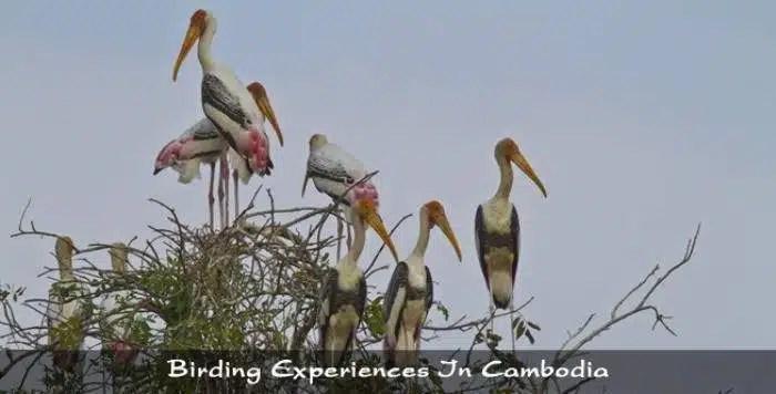 9. Sam Veasna Centre, Cambodia