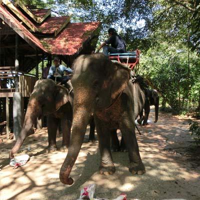 Olifanten Thailand