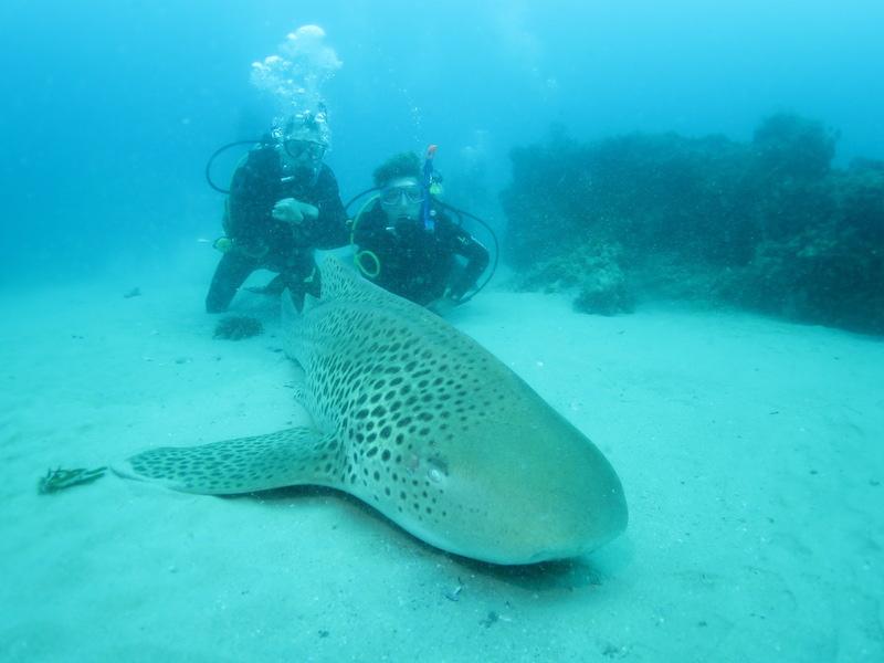 Een duik als nooit tevoren, North Stradbroke, Australië