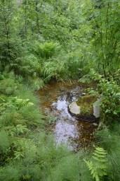 Lähdettä ympäröivä maasto on kesäisin rehevää.