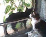 gatos2014 (108)