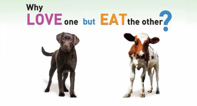 why vegan.jpg