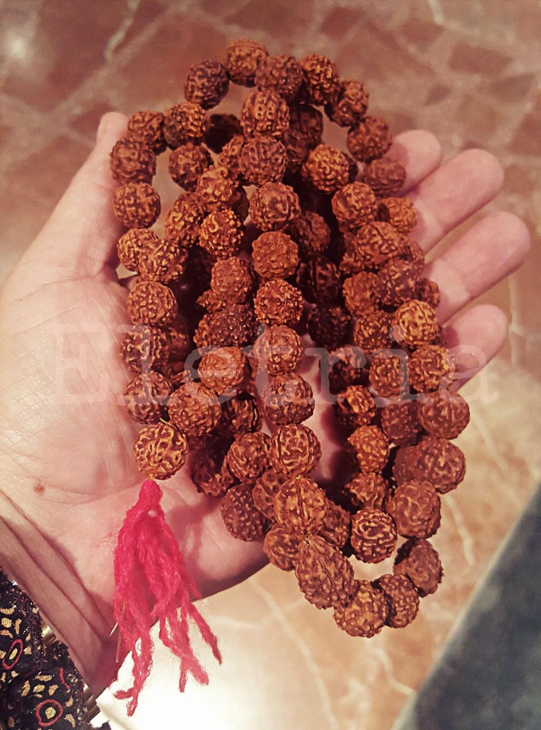 Mala Hindù de Semillas de Rudraskha.