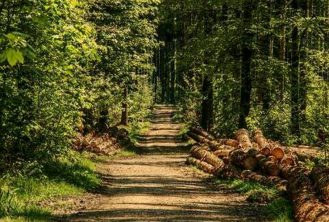 Forest management Nigeria
