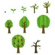 木の成長過程