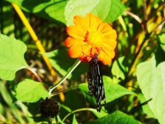 Kep butterfly farm dans la jungle de Kep