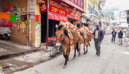 Rishikesh, le transport des briques se font à dos de mulets ou d'ânes