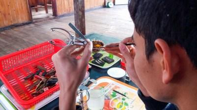 Greffe d'huîtres perlières de la Baie d'Halong Vietnam
