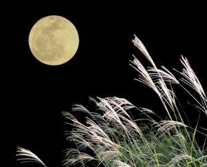 月見 日本 行事