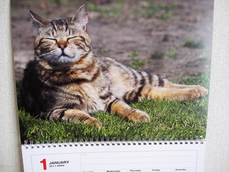 岩合光昭 カレンダー 2018