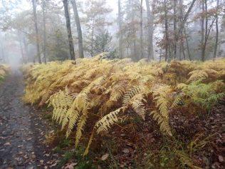28-10-2016-fontainebleau-par-etienne-lnquetin-015