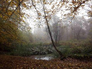 28-10-2016-fontainebleau-par-etienne-lnquetin-027