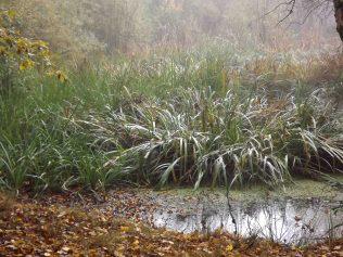 28-10-2016-fontainebleau-par-etienne-lnquetin-029
