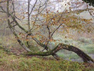 28-10-2016-fontainebleau-par-etienne-lnquetin-032