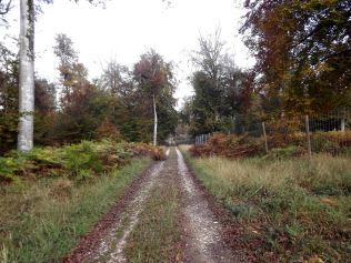 28-10-2016-fontainebleau-par-etienne-lnquetin-046
