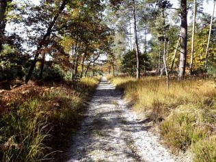 28-10-2016-fontainebleau-par-etienne-lnquetin-089