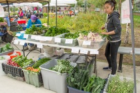 Fresh produce from Vang Family Gardens, grown in Wasilla.