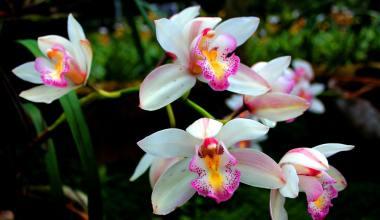 pragas-e-doenças-em-orquídeas