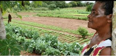Mulheres e pessoas pretas ou pardas são minorias na produção agropecuária