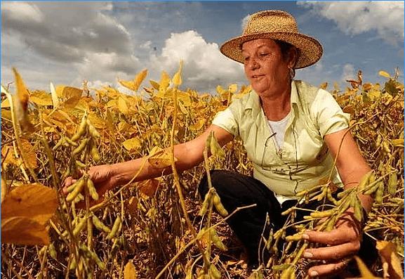 Mulheres rurais: a luta pelo reconhecimento e pela vida