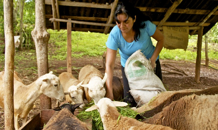 #04 – Impactos no investimento rural: Agricultores como protagonistas
