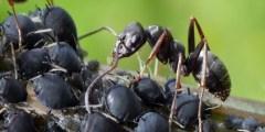 تفسير حلم النمل الأسود على الجسم