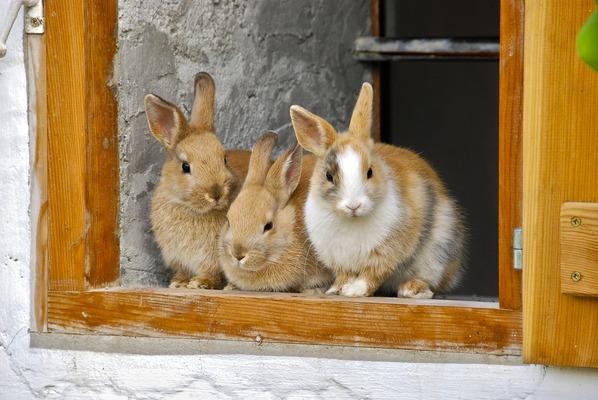 رؤية الأرانب الكثيرة في المنام 2020 موقع ملخص