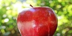تفسير حلم التفاح الاحمر للحامل
